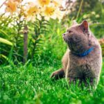 How To Keep Cats Out Of Your Yard
