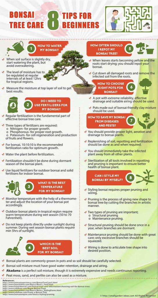 bonsai tree care guide
